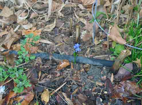 022308squill.jpg