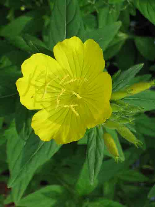 052711yellowflowers.jpg