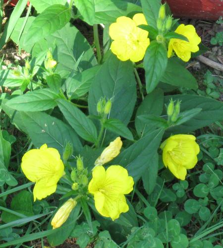 060713italflowers.jpg