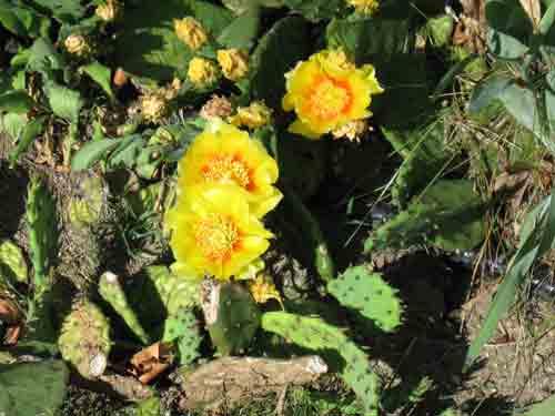 061010cactus.jpg