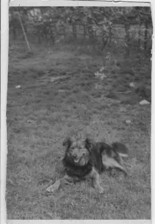 1955rex2.jpg