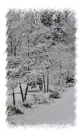 Winter-005.jpg