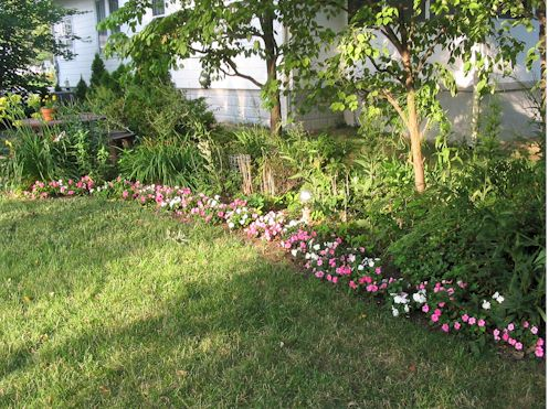 backyard071207.jpg