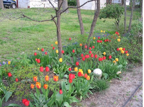 tulipgarden.jpg