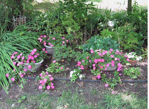 backyard070808.jpg