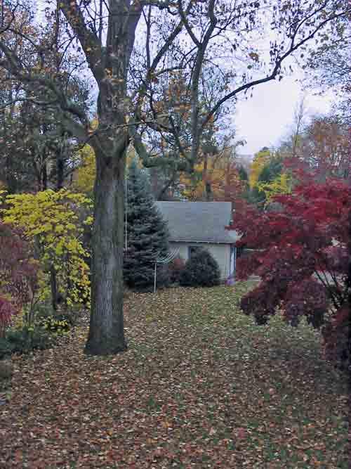 backyardfoliage.jpg