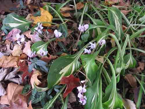 flowers110708.jpg