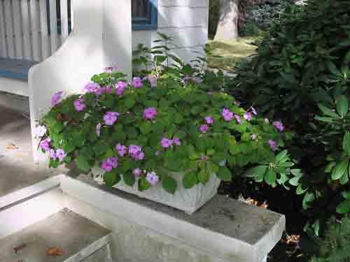 planter102408.jpg