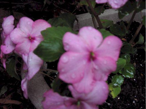 raspberryswirl2.jpg