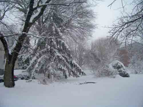 sprucetree.jpg