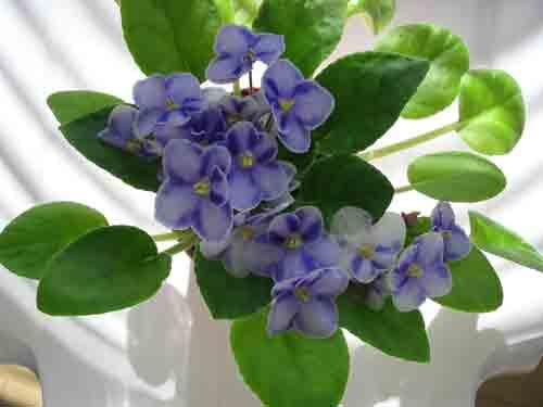 violet122404.jpg